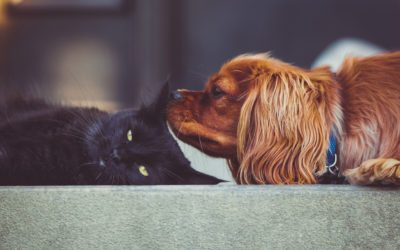 The Benefits of Using a Pet Sitter