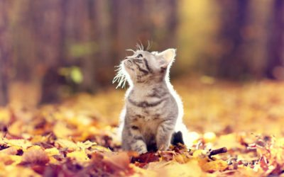 5 Fall Pet Safety Tips