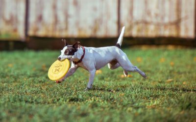 Nutrition and Exercise for Dogs