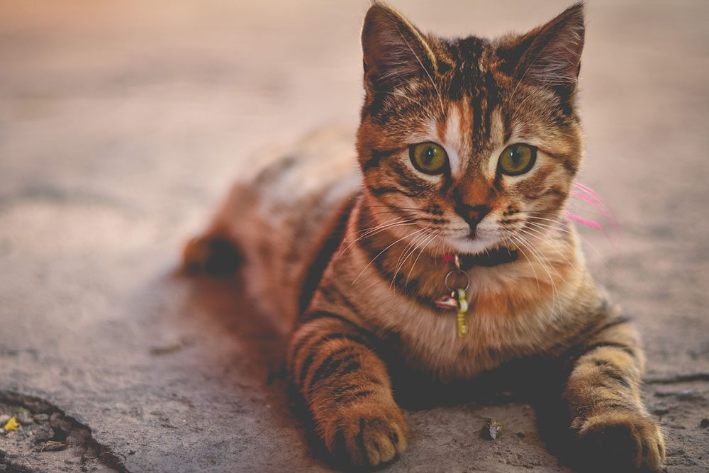 6 Things To Keep Away From Your Cat