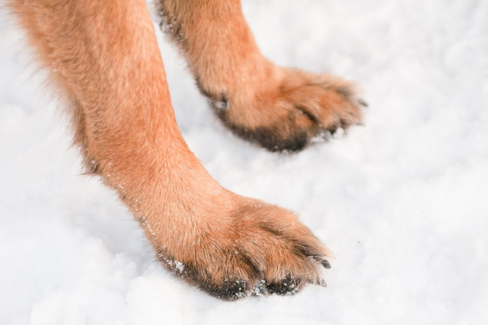 7 Tips for Dog Walking in the Snow