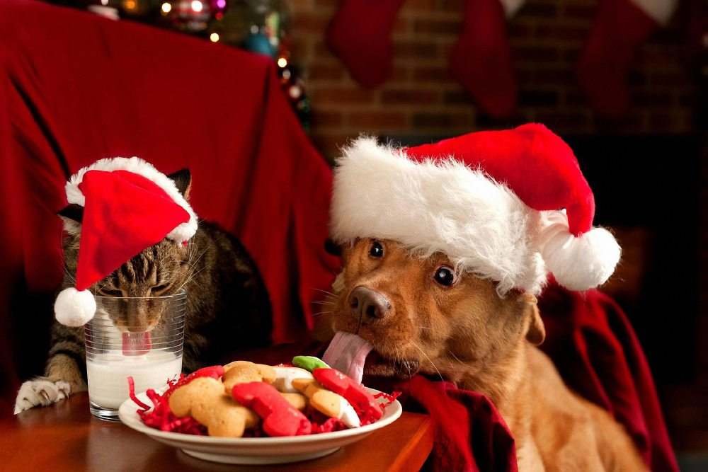 Holiday Pet Sitting Tips