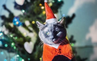 Make A Cat-Friendly Xmas Tree