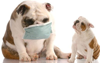What To Do About Dog Coughing