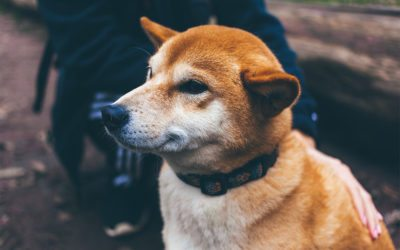 Safety Tips for Dog Walkers