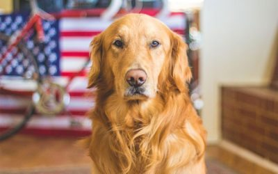 The Importance of Pet Hygiene