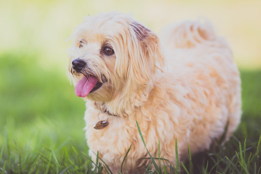 Benefits of Home Dog Boarding
