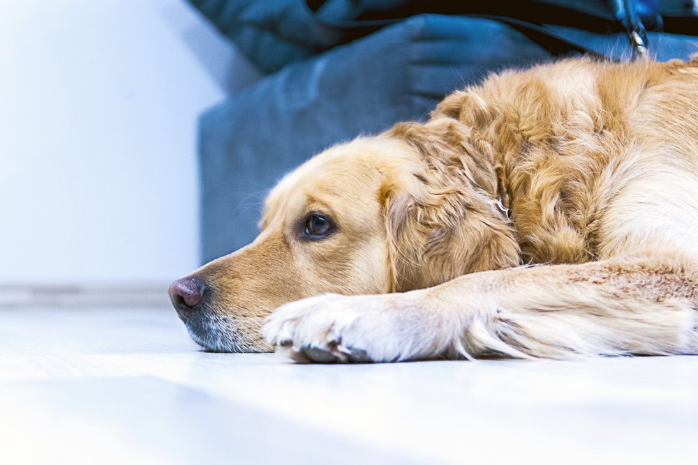 Is Dog Boarding Right for You?